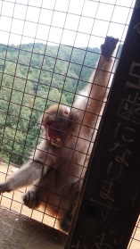 Macaque monkey (complete with red butt) stuffing his face with peanuts